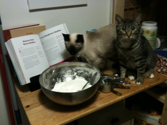 My kittens, Malcolm and Inara, make muffins.
