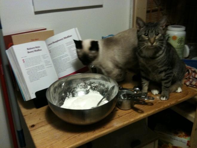 My kittens, Malcolm and Inara, make muffins.