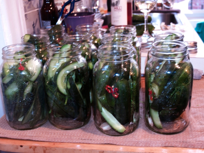 Pretty little jars all in a row, ready for their brine.